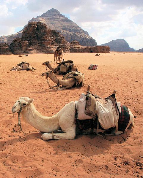 traditional transportation, Wadi Rum, Jordan