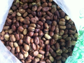 dried ful beans