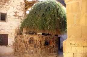 Burning Bush, St. Catherine's Monastery, Sinai Peninsula