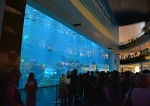 Dubai Aquarium, Dubai Mall