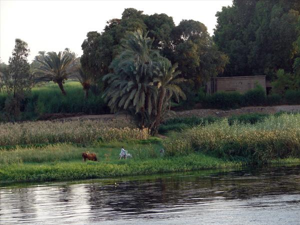 banks of the Nile, photo by Jason Hedrick