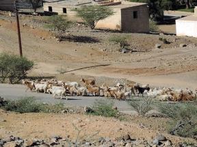 road to Al Hamra, Oman, photo by Sallie Volotzky