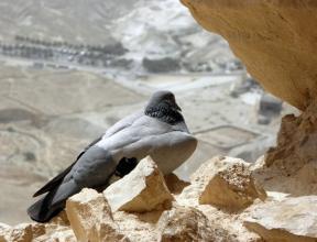 bird's-eye view, Masada, Israel, photo by Sallie Volotzky