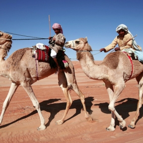 camel races, Wahiba Sands, photo courtesy of Elite Tourism, Oman