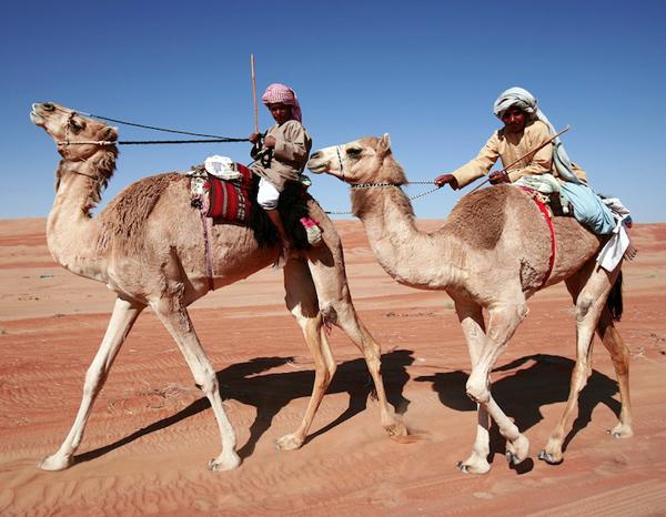 camel races, Wahiba Sands, photo courtesy of Elite Tourism, Oman