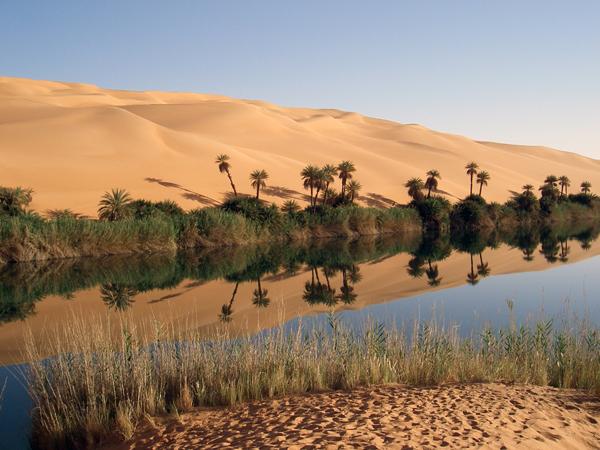 Arabian desert the yalla blog to see the wonder tree in its natural habitat visit the arabian peninsula click here sciox Images
