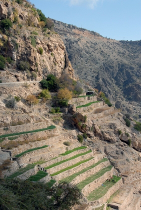 terrace farm, Oman, photo courtesy of Elite Tourism