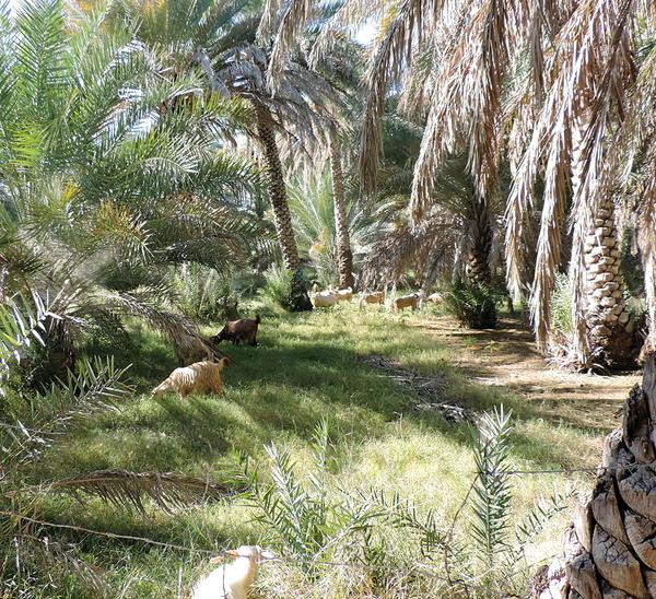 Misfat Al Abryeen, Oman, photo by Sallie Volotzky