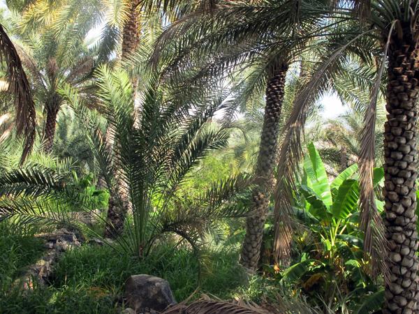 Misfat Al Abryeen, Oman, photo courtesy of Elite Tourism